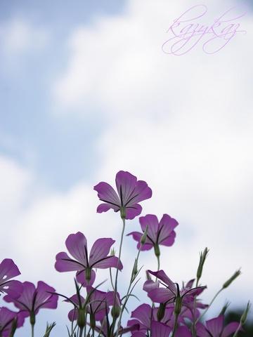 空を見上げりゃ~♪.JPG